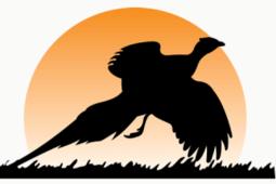 Pheasant Hunting Package