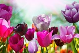 Spring Rewards