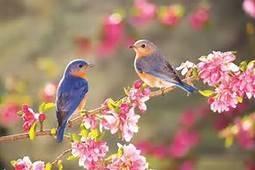 Winter Love Birds