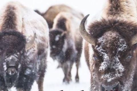 Grand Travel Planner: Custer, Black Hills, Badlands and More